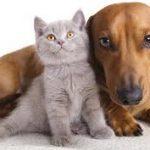 پیشرفت دارویی در تولید مثل سگ و گربه